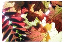 #5 Leuchttisch-Collage
