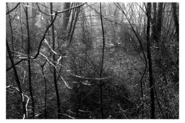 #24 Monoprint / Leuchttisch-Collage